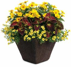 Do you live in the big city and have very limited gardening space, let me introduce you to container gardening.