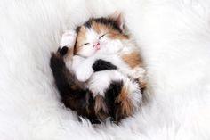 catball !!!