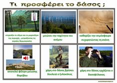 Το νέο νηπιαγωγείο που ονειρεύομαι : Παγκόσμια ημέρα Δασοπονίας - 21 Μαρτίου Safari, Camping, Teaching, School, Drawings, Crafts, Trees, Diy, Campsite
