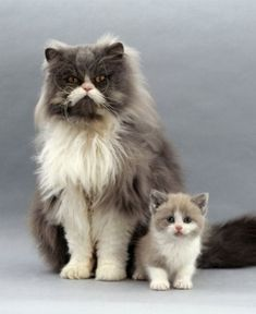 30 Great Pictures of Cats with Their 'Mini Me' - We Love Cats and Kittens