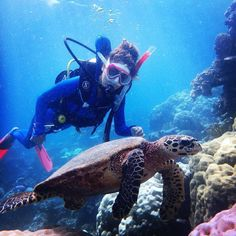 Travel without a bit of adventure is not the best travel right? Have you ever thought about scuba diving at the great barrier reef? Have you been there? Please share your experiences :)  Location: Australia Cairns  Photo: @shikeerashikeera  #travel #traveller #travelling #travellingram #mytravelgram #igtravel #travelawesome #beautifuldestinations #bestvacations #travelblog #traveladdict #travelblogger #instapassport #tourism #tourist #holiday #seetheworld #shareyourstory #diving #friends…