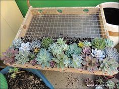 Muitas pessoas tem me pedido o passo-a-passo para fazer um Quadro Vivo ou Jardim Vertical de Suculentas, eu e meu marido ja fizemos o nosso...