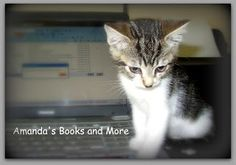 """This photo is of Prince, as a kitten, sitting on my laptop. Check out a Five Minute Friday writing prompt on the word """"here"""" and my weekend blog hop at http://abooksandmore.blogspot.com/2013/04/make-my-saturday-sweet-blog-hop-32.html"""