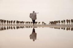 Mineiro sal tomar uma caravana de camelos ao local de mineração