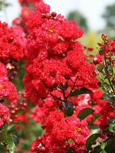Plant these trees and shrubs that will add color and interest to your landscape!