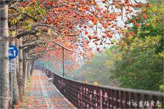 【台中木棉花】東勢大橋木棉花大道~漫遊紅色大道上的小旅行-13's幸福食光-旅遊美食部落格