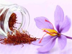 Talk about a cash crop, the dried stigmas and styles of Crocus sativus are known as one of the most expensive spices by weight; now you can grow your own saffron in your garden. Saffron is revered for its unique flavor that has been described as a slightly metallic honey with hay notes