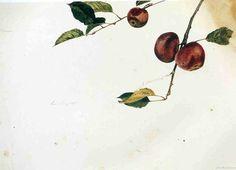 Andrew Wyeth Paintings 50.jpg
