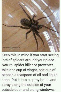 Spider Repellant ....