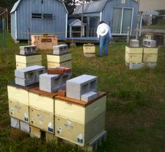 Preparing Carniolan Winter Nucs