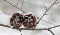A pair of Owlets http://ift.tt/2fieirI