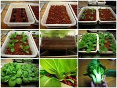 small space, big crop