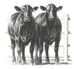 Two cows by a fence