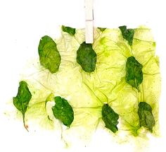 Edible Fabric From Vegetables