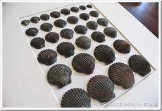 Framed Sea shell art
