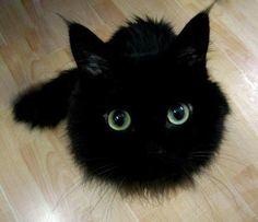Fluffy cuteness!