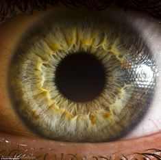 Green eyes: The color of green eyes does not result simply from the pigmentation of the iris