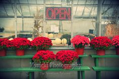 Red Mums For Sale Fine Art Greenhouse 8 x 10 by msvicwaas on Etsy