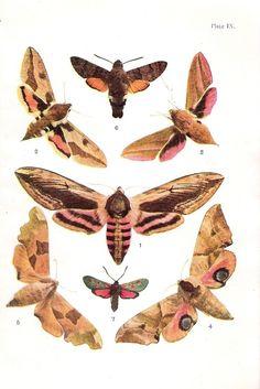 Vintage Color Print of British Moths di VintageFosterCare su Etsy