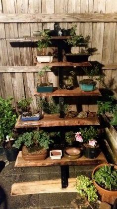 New bonsai stand #bonsaitrees