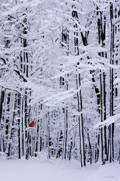 Ron Jones Photograph - Winter Still by Ron Jones