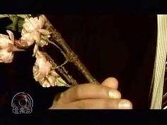 Metis-01 梅は咲いたか 桜はまだかいな180