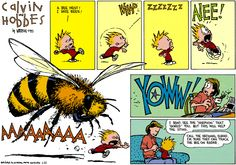 This comic is a bit of a running joke in my family. My dad got stung by this bee once. It was THIS BIG