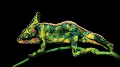 """""""Mindblowing work by Johannes Stötter. The artist painted on the bodies of two women, sisters, who are lying on top of each other and moving to create the illusion of a chameleon walking."""""""