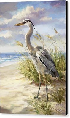 Blue Heron  Canvas Print by Laurie Hein.  All canvas prints are professionally printed, assembled, and shipped within 3 - 4 business days and delivered ready-to-hang on your wall. Choose from multiple print sizes, border colors, and canvas materials.