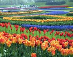 See the Best of Spring on a Dutch Tulip Cruise Love Flowers, Spring Flowers, Beautiful Flowers, Beautiful Places, Tropical Flowers, Colorful Flowers, Wonderful Places, Flower Garden Pictures, Flower Farm