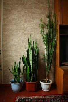 Die 44 Besten Bilder Von Wohnung Pflanzen Apartment Plants Herbs