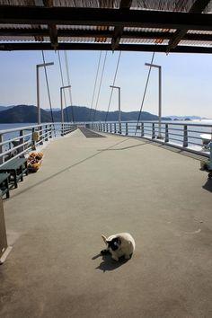 Hana-chan cocks a leg at Sea Road fishing pier in Yawatahama.