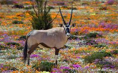 South Africa Accommodation, Hotels and Travel
