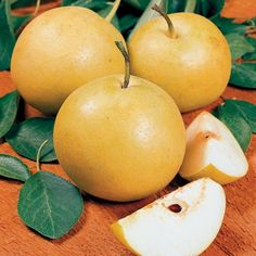 Starking Hardy Giant -- large pears — weighing 12-15 ounces.  This easy-to-grow tree produces sweet, juicy fruit that keeps well, storing up to nine months in the refrigerator.  Resistant to pear leaf spot.  Cold-tolerant.  Ripens in mid September.  Best pollinators: Hosui, New Century or Bartlett.