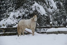 Horse in winter. My model for the old mustang, Frosty, in One Frosty Christmas. What a fun photo shoot it was. Copyright 2017 Laura Hesse