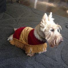 El banquito de La Bella y la Bestia. | 27 Disfraces de Halloween extremadamente ingeniosos para tu perro