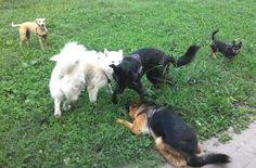 08/09/2015 - Torino con Ollie, Temi, Peja e Bobby