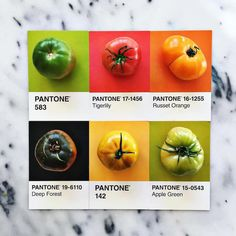 Designer Lucy Litman celebrates the beautiful colors found in the world by matching food items with their Pantone swatches. For months now, the creati