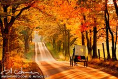 fall splendor-a classic favorite-a white top Amish buggy travels down a road flanked by fall foliage late afternoon sun autumn Amish Country, Country Roads, Horse And Buggy, Enchanted Home, Autumn Scenery, Lombok, Beautiful Places, Beautiful Pictures, Beautiful Roads