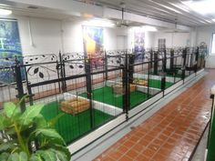 -Repinned- Small Dog Boarding Kennel.