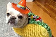 30 Adorable Dogs Dressed Like Tacos