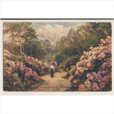 AG47 Rhododendron Land, Branksome Park, Bournemouth - local publisher Listing in the Dorset,England,Topographical,Postcards,Collectables Category on eBid United Kingdom