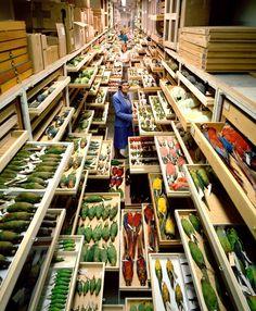 Kijkje in het archief van het National Museum of Natural History, Wahington DC. Fijn zeg, al die laatjes! Daar wil ik wel eens rondsnuffelen.  Foto's: Chip Clark.
