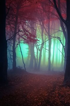 thevoyaging:  Misty The Enchanted Wood photo via tectonic
