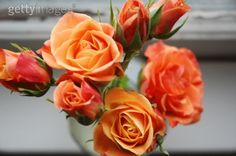Peachy-orange spray roses...