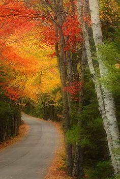 A New England autumn lane