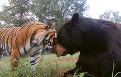 Google Image Result for http://3.bp.blogspot.com/_VPgbU8QSOtU/TS-uTzHiXbI/AAAAAAAABhs/BdR2e3Piveo/s1600/5165_unlikely-animal-friends-II-08_04700300.jpg