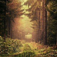 A beautiful forest scene. I would love to take a stroll down that golden path. Dreams..
