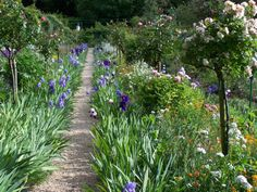 Monet's garden in Giverny - ✳   #Home  #Landscape #Design via Christina Khandan, Irvine California ༺ ℭƘ ༻   IrvineHomeBlog