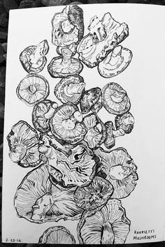 E.O.Brown Sketchbook: line drawing of mushrooms done in Pentel Brush pen and Faber-Castell Pitt pens
